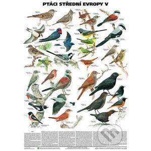 Plakát - Ptáci střední Evropy 5. díl (Pěvci 1) - Scientia